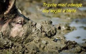 6 - błoto świnia