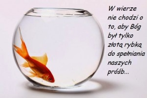 2 - złota rybka